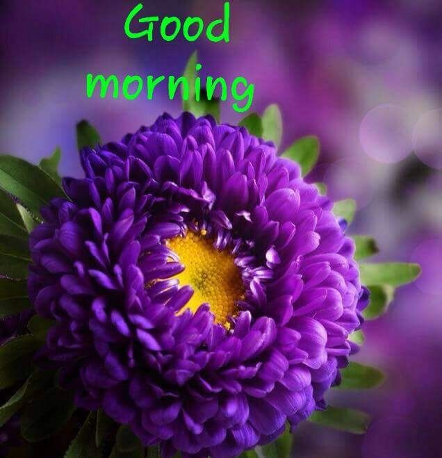 flower nature interesting hdr purple good morning...