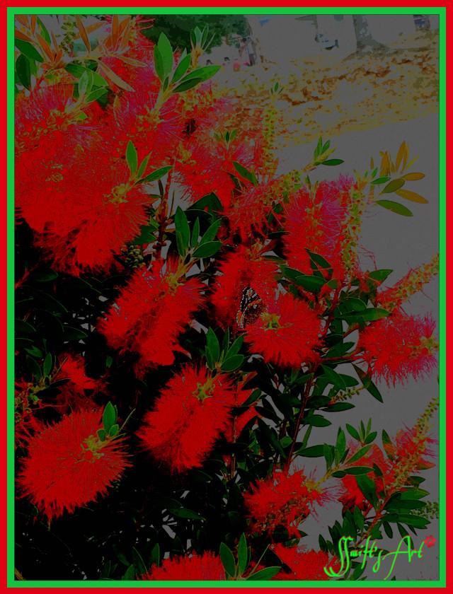 #redbush  #butterfly  #naturephotography  #artistc  #brightcolors