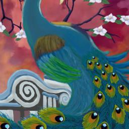 peacock india nationalbird flower sunset dcpeacock