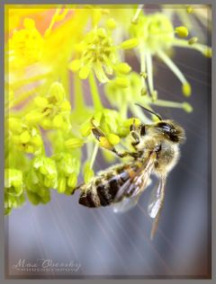 spring flower insect nature balcony