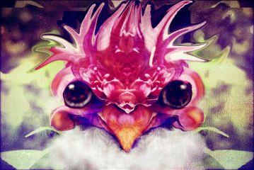 plant phoenix