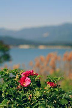 beach travel flower nature
