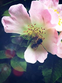 flowers bee nature beauty bloom
