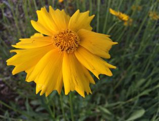 flower yellow interesting photography nature