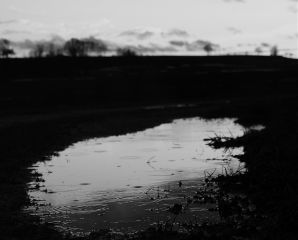 lightanddark photography nature blackandwhite rain