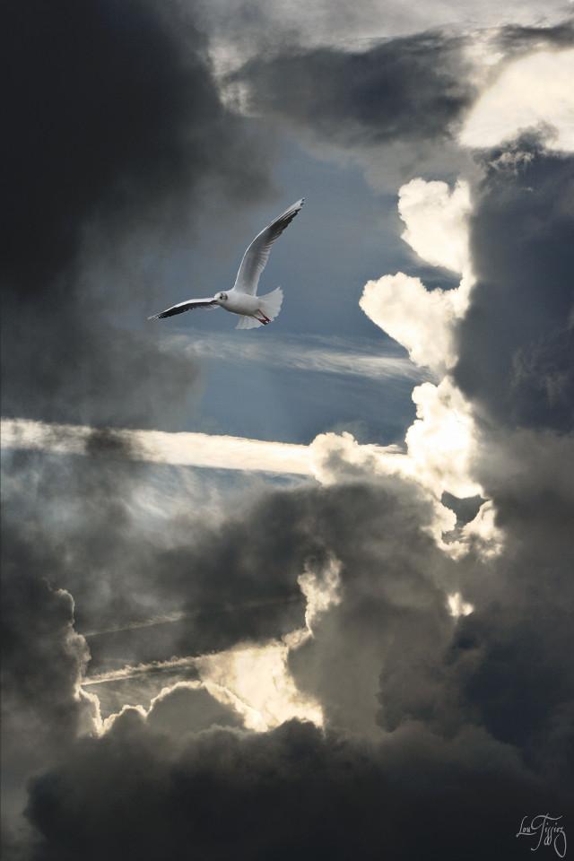 #wapdramaeffect  #clouds #sky #seagull #drama