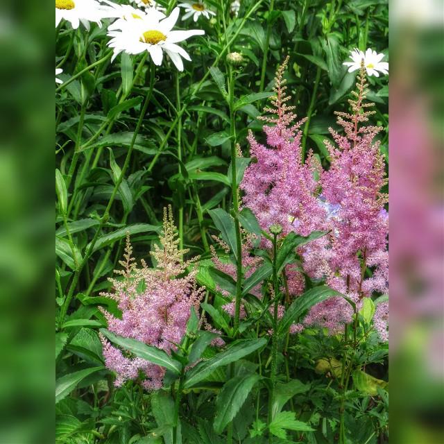 Good Morning !   #photography #flower #nature #summer