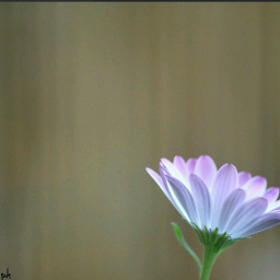 bright flower nature love photography