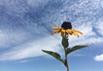 flower summer sky clouds yellow