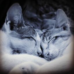 mobilephotography petsandanimals cute baby love