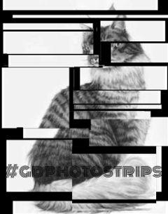 gdphotostrips