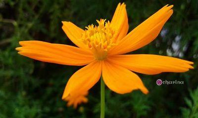 flower photography orange
